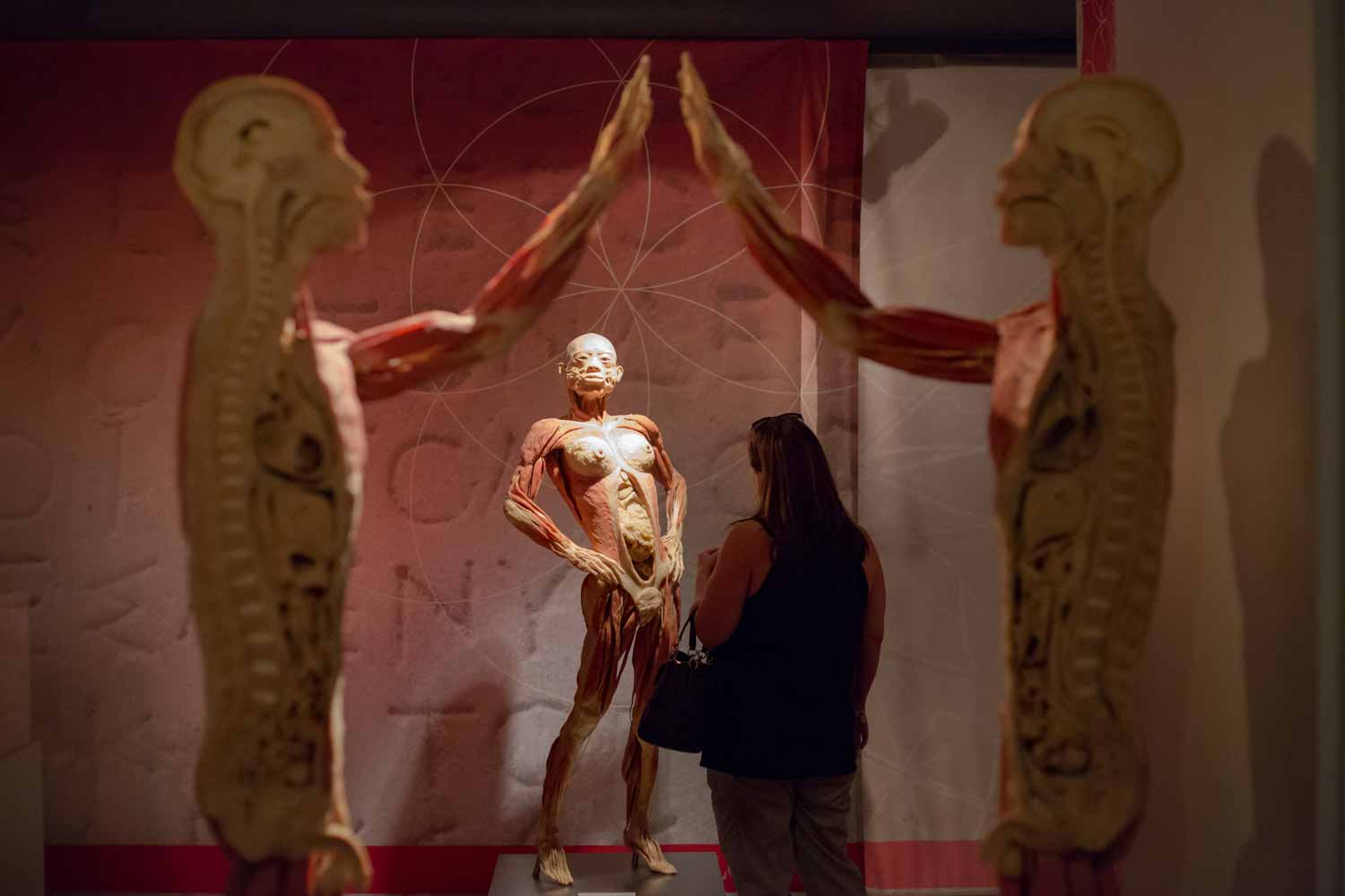Real Bodies Exhibits at Bally's