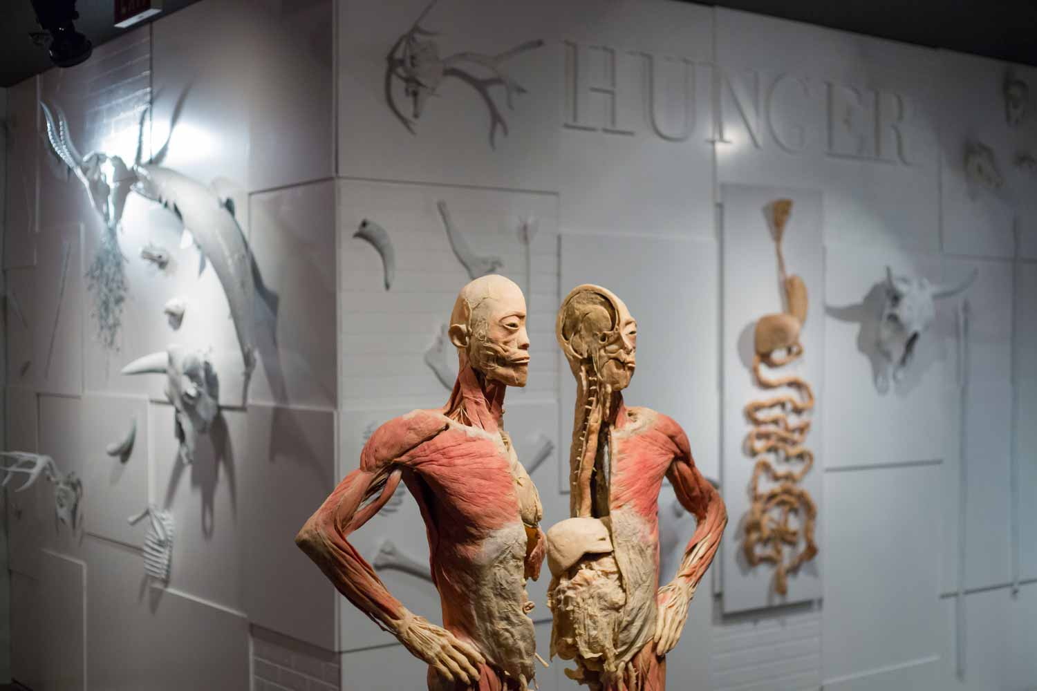 Real Bodies Hunger Exhibit